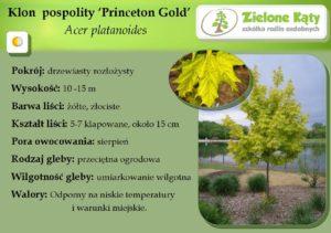 Klon Princeton Gold