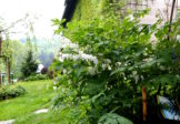 """Konkurs fotograficzny """"Mój ogród, moje miejsce na Ziemi…"""""""